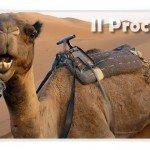 pagare denaro vedere cammello