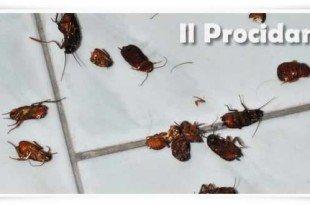 scarafaggi blatte