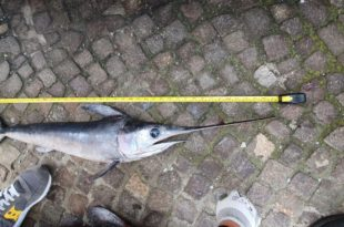 Pozzuoli pesce sottomisura Guardia Costiera rotated